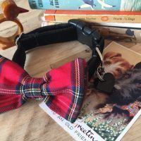 Scrufts' Hamish BlackVelvet Dog Collar with Red Tartan Bow Wow Wow Tie