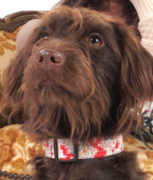 Scrufts Gypsy Paisley Dog Collar