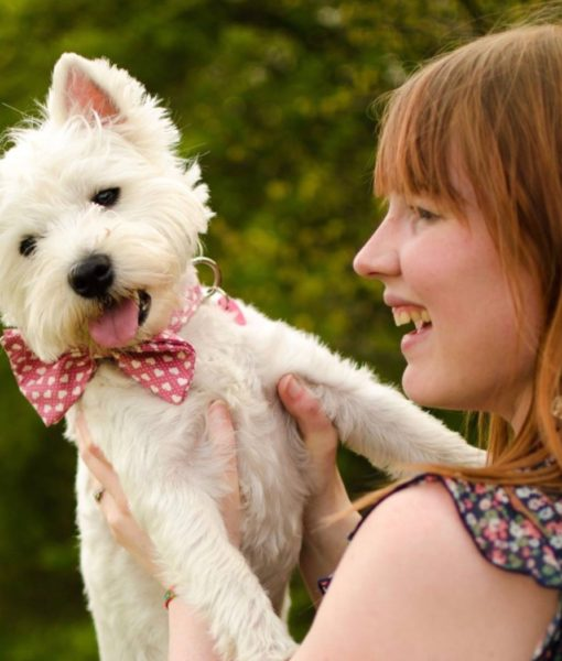 Scrufts Dickie Valentine Bow Wow Wow Tie Dog Collar