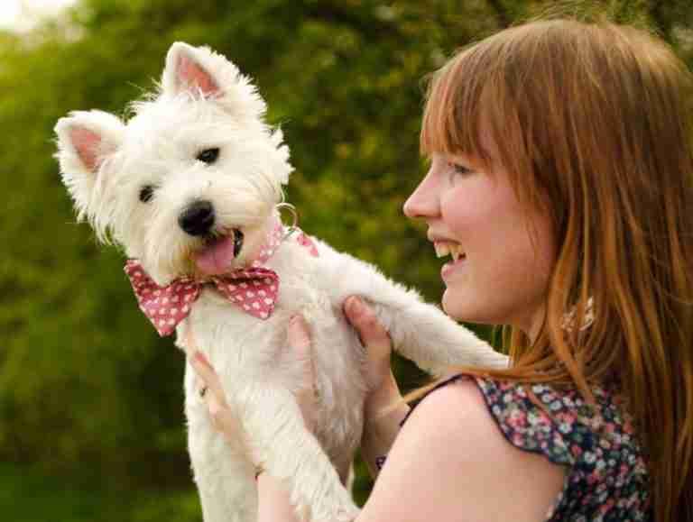 Scrufts Dickie Valentine Bow Wow Wow Tie Dog Collar