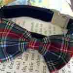 Scrufts' Dougal Velvet Dog Collar With Tartan Bow wow wow Tie