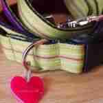 Scrufts' Roobarb Striped Dog Collar and Lead