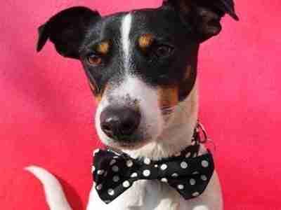 Mr Phillips Bow Tie Collar