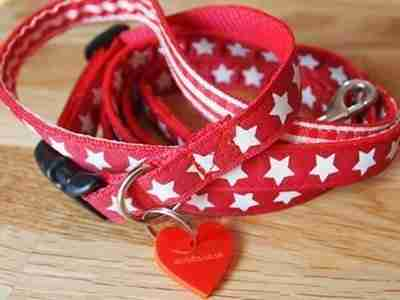 Scrufts Mini Star Puppy Dog Collar and Lead