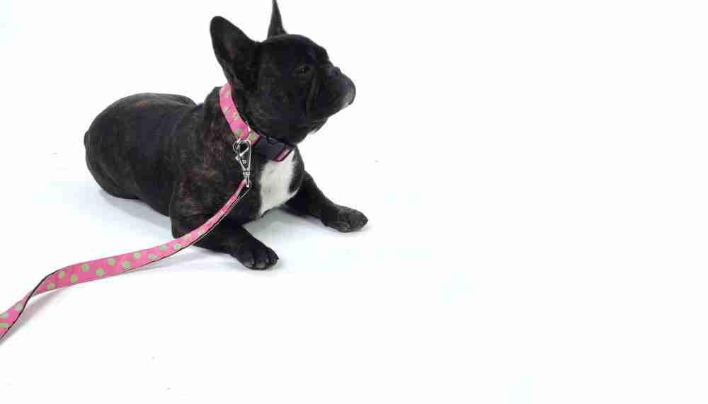 Scrufts' Sorbet Pink and Lime Polka Dot Dog Collar and Lead