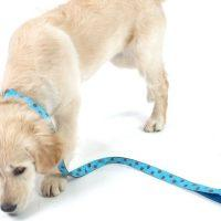 Scrufts' Bloo Bright Turquoise and Toffee Polka Dot Dog Collar and Lead