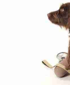 Scrufts' Contemporary Dog Collars and Leads