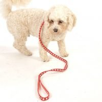 Scrufts' Collars and Leads for Small Breeds and Puppies