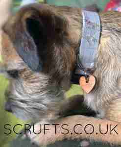 Scrufts' Barkley Dog Collar