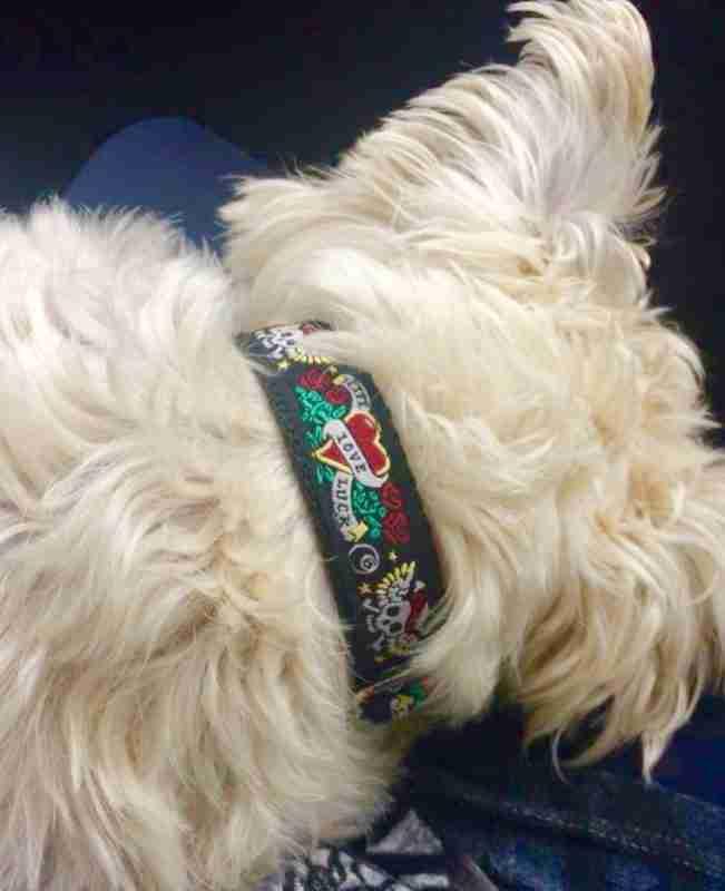 Scrufts' Captain Jack Dog Collar