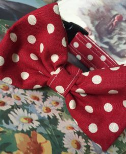 Scrufts' Mrs Phillips Red and Cream Spotted Bow Wow Wow Tie Dog Collar