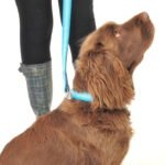 Scrufts' Ahoy There Striped Dog Collar and Lead