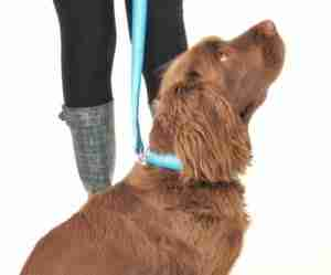 Dogs we Have Loved and Lost. Scrufts' Ahoy There Striped Dog Collar and Lead.