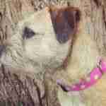 Scrufts' Sorbet Dog Collar and Lead