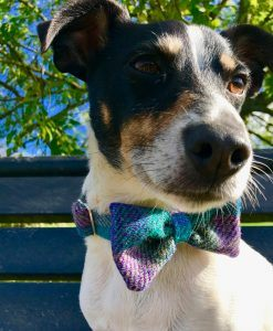 Scrufts' Dickie Bow Tie Dog Collars and Floral Posy Dog Collars