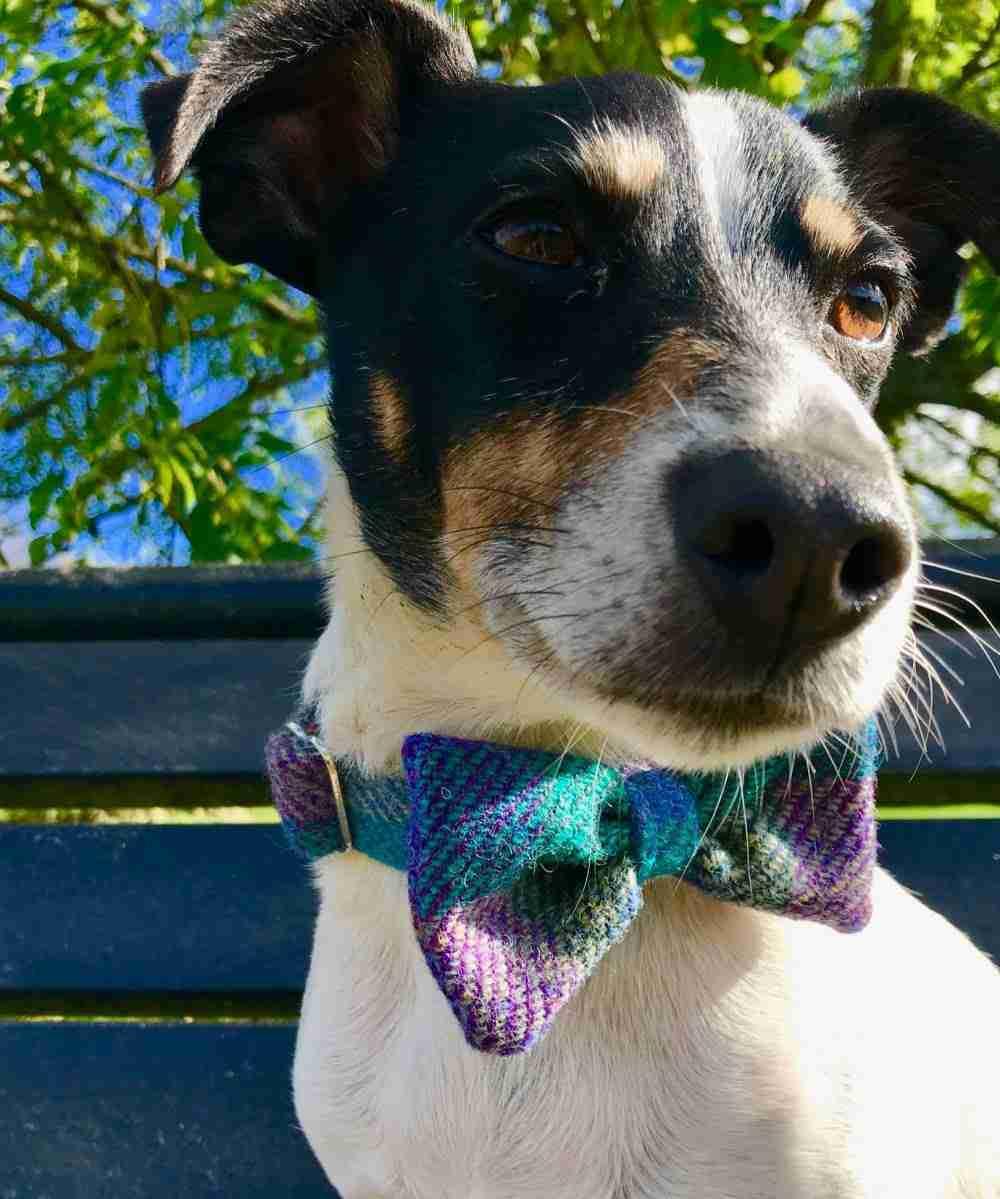Harris Tweed Dog Bow Tie Collar in Beautiful Blue