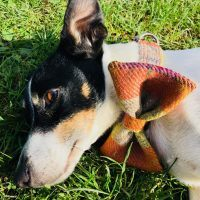 Harris Tweed Handmade Bow Tie Dog Collar in Ginger