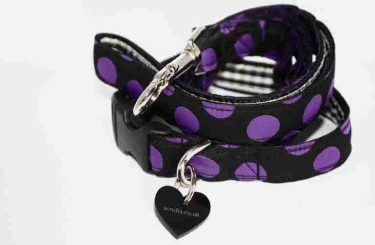 Scrufts' Charleston Black and Purple Polka Dot Collar and Lead