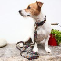 Scrufts' Mini Oska Dog Collar and Lead