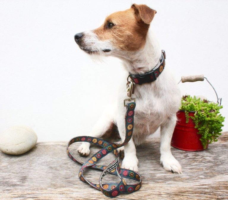 Scrufts' Mini Oska Dog Collar and Lead