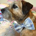 Mr Jack Bow Wow Wow Tie Dog Collar