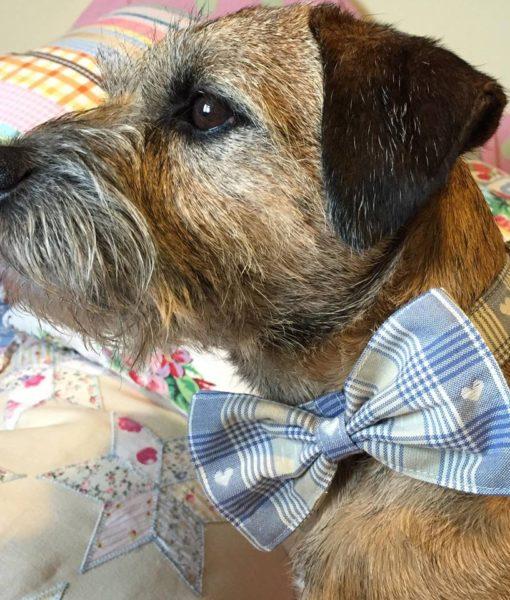 Mr Jack Bow Wow Wow Tie Dog Collar
