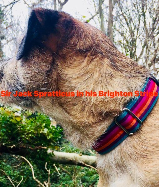 Scrufts' Brighton Stripe Dog Collar