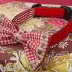 Be Mine Bow Wow Wow Tie Dog Collar