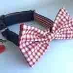 Scrufts' Bow Wow Wow Tie Dog Collar