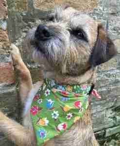 Scrufts' Campion Dog Bandana