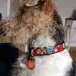 Scrufts' Tuftu Squirrel Dog Collar