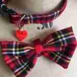 Scrufts' Fergus  Tartan Bow Tie Wedding Collar