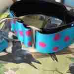 Scrufts' Turqoise Tropical Dotty Velvet Lined a Greyhound Collar