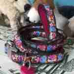 Birdie Collar and Lead for Puppies or Small Dogs