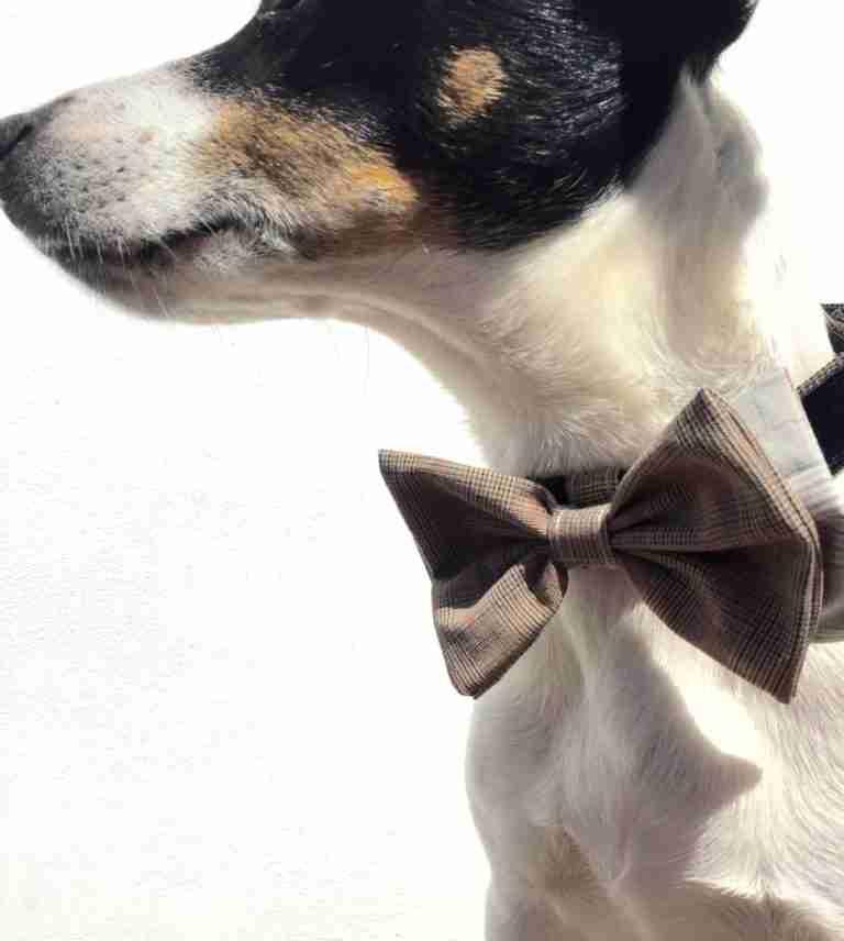 Scrufts' Barnaby Black Velvet Bow Wow Wow Tie Dog Collar