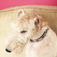 Scrufts' Rhubi Velvet Lined Dog Collar