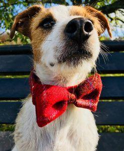 Harris Tweed Handmade Dog Bow Tie Dog Collar in Red Berry