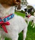 Christmas Dog Collar Santa Paws by Scrufts