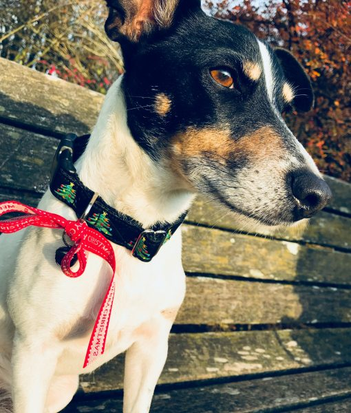 Christmas Dog Collar Norwegian Wood