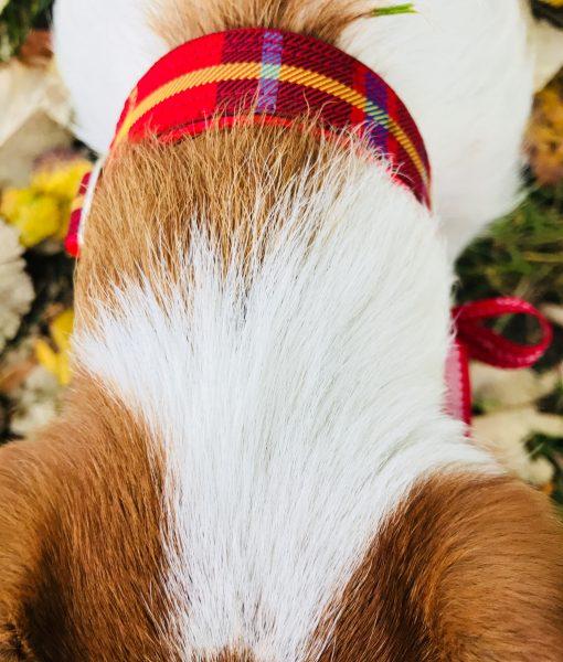 Christmas Dog Collar in Skandi Red Check
