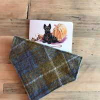 Scrufts' Spitfire Velvet Lined Harris Tweed Dog Collar