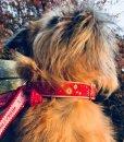 Christmas Dog Collar Northern Lights