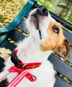 Christmas Dog Collar in Skandi Red Check