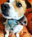 Harris Tweed Handmade Bow Tie Dog Collar in Spitfire Check