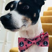 Captain Noodles Nautical Bow Tie Dog Collar