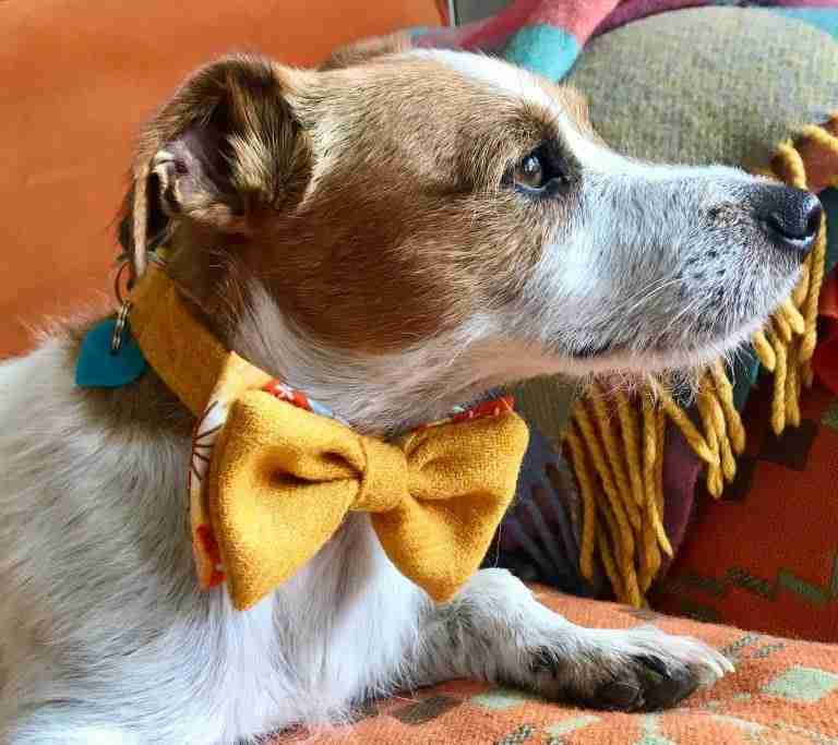 Scrufts Sunny Bow Tie Dog Collar in Harris Tweed