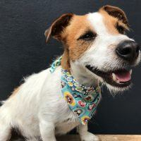 Elmer's Chums Reversible Dog Bandana