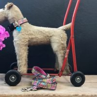 Scrufts' Paisley Park Dog Collar and Lead