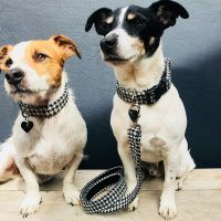 Scrufts Mono Harris Tweed Dogtooth Dog Collar and Lead with Velvet Lining