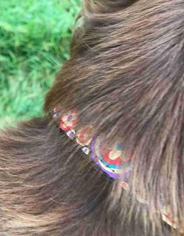 Scrufts Mila Dog Collar